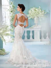 216246 Ivory/Champagne back